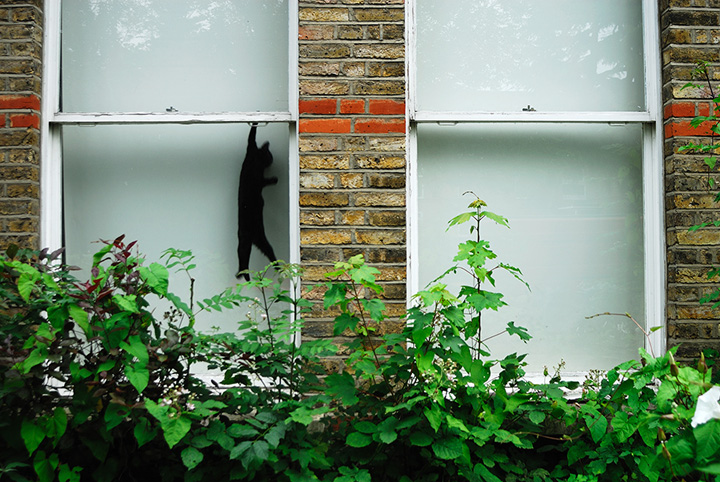 Paul Treacy - Black cat in Sydenham