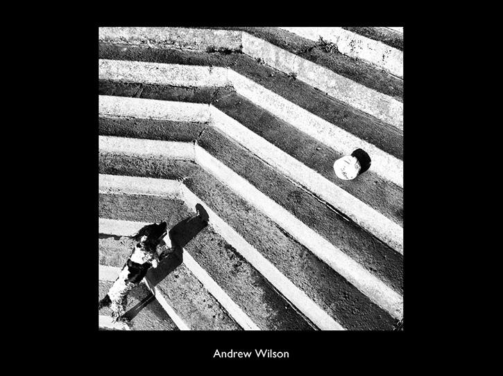 Andrew Wilson photo