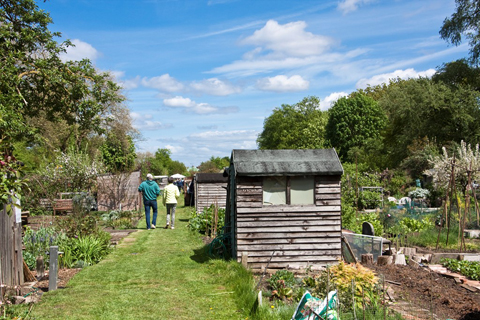 Hertford Rd Allotments, Andrew Wilson